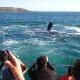 Pietų Afrika (PAR) - plaukiame žiurėti banginius