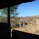 Pietų Afrika (PAR) - safario akimirkos