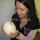 Pietų Afrika (PAR) - Kiaušinis stručių fermoje Oustšurne (Oudtshoorn)
