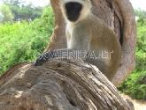 Rytų Tsavo parkas