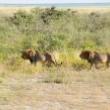 Kelionės į Namibiją