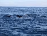 Delfinai ir nardymas