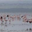 Kenijos lankytinos vietos