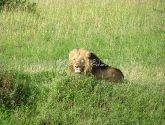 Masai Mara Rezervatas