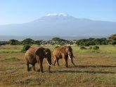 Ambozeli Nacionalinis parkas