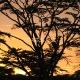 Saulėtekis parke