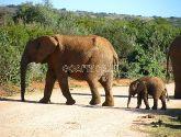 Addo nacionalinis dramblių parkas