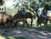 Jodinėjimas drambliais