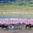 Kelionė nuo Kenijos iki Viktorijos Krioklių